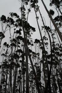 Wabiliga National Park, Australia, 2012